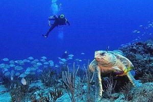 singer island scuba
